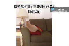 Cuando tú y tu gato no se hablan