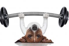 ¿Por qué es importante hacer ejercicio? ¡GRANDES beneficios!
