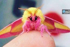 Los 8 Insectos bonitos del mundo ¡Que perfecta es la naturaleza!