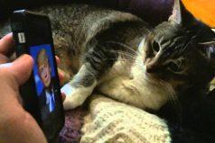 Mira la reacción de este gato cuando ve una foto de Donald Trump ¡Es muy expresivo!