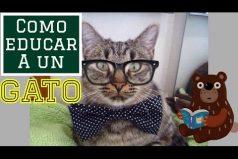 ¿Cómo educar a tu gato? ¡Amamos los animales!