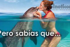 Los secretos que no conocías de los delfines ¡Hermosos pero misteriosos!