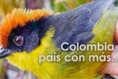 Las aves más bellas de Colombia ¿Las conoces?