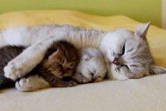 Los Gatos más Cariñosos del mundo ¡Gatos que Abrazan!!