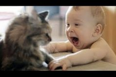 Este video te alegrará el día ¡No pararás de reír con estos gatos!