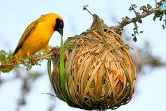 Los nidos más asombrosos del mundo animal ¡Quedarás con la boca abierta!
