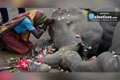 En la India: Mueren dos elefantes después de chocar con un cable de alta tensión