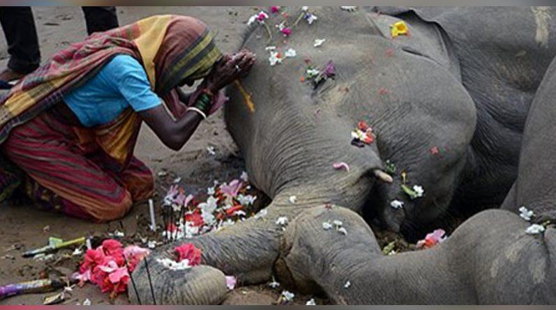 Mujer al lado de un elefante