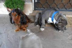 Mira la reacción de estos perros ante el regaño de su dueño ¡Son muy tiernos!