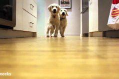 Estos cachorros fueron filmados todos los días durante 9 meses mientras iban a comer ¡Son adorables!