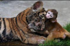 Estos son los animales más tiernos ¡Morirás de amor!