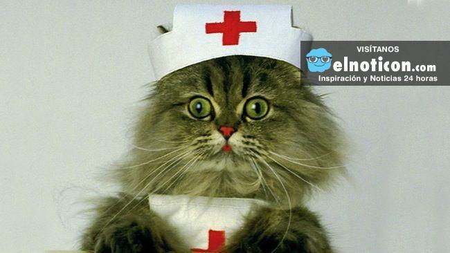 Gato enfermera