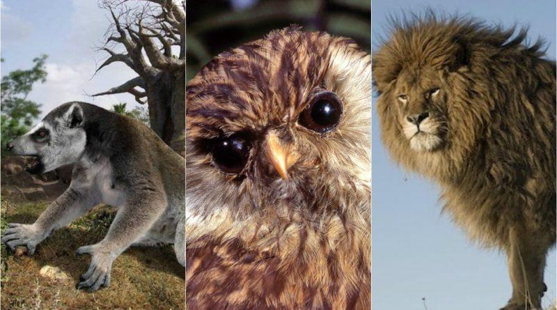 7 animales que se extinguieron antes de que pudiéramos conocerlos ¡Eran hermosos!