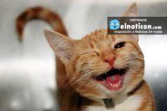 ¿Sabías que reírte mejora tu memoria? conoce las razones