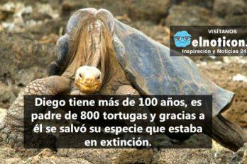 Diego, la tortuga que salvó su especie en las Islas Galápagos