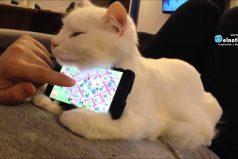 ¿Te parece que el celular es el mejor evento del mundo? Ahora podrá detectar enfermedades