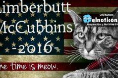 Limberbutt McCubbins, el gato que quiere ser presidente de Estados Unidos ¡Una historia real!