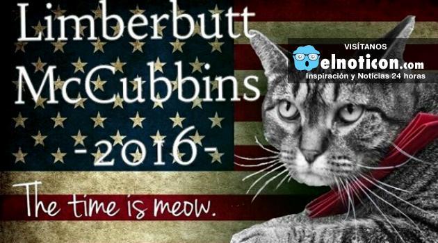 Limberbutt McCubbins, el gato que quiere ser presidente de Estados Unidos