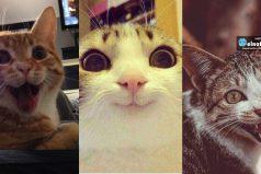 Estos son los 15 gatos más felices que verás hoy ¡Te alegrarán el día!