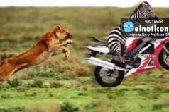Los 7 animales más veloces del mundo ¡A CORRER SE DIJO!