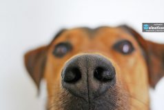 Fáciles y efectivas: 8 maneras de eliminar los malos olores de tu hogar