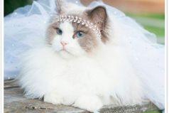 Princess Aurora ha conquistado Instagram como la gatita más hermosa del mundo