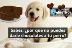 Si amas a tu perro, nunca le vayas a dar chocolates