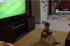 Este adorable perro es un fanático del fútbol, así celebra un gol de su equipo