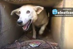 Así fue el increíble rescate de este perro atrapado en un desagüe en Perú