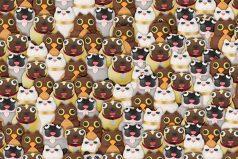 Las redes buscan desesperadamente al panda oculto en esta foto ¿puedes encontrarlo?