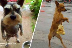 15Perros que adoran caminar como personas