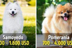 19 Perros que cuestan una fortuna