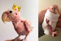 Una de las mascotas más populares de Instagram es un pájaro sin plumas