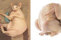 Estos 23 animales son tan parecidos a platos de comida que morirás de hambre