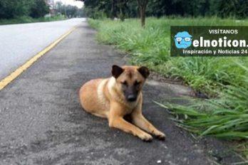 El último día de Jaow Loung, la perrita que se perdió en una carretera de Tailandia y que esperó a su amo por un año