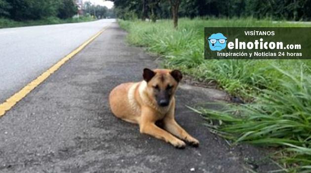 El último día de Jaow Loung, la perrita que se perdió en una carretera de Tailandia y que esperó a su amo por un año.