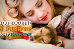 ¿Qué ocurre si duermes con tu mascota? Son divinas