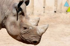 Estos animales se extinguieron por culpa del hombre ¡Qué tristeza!
