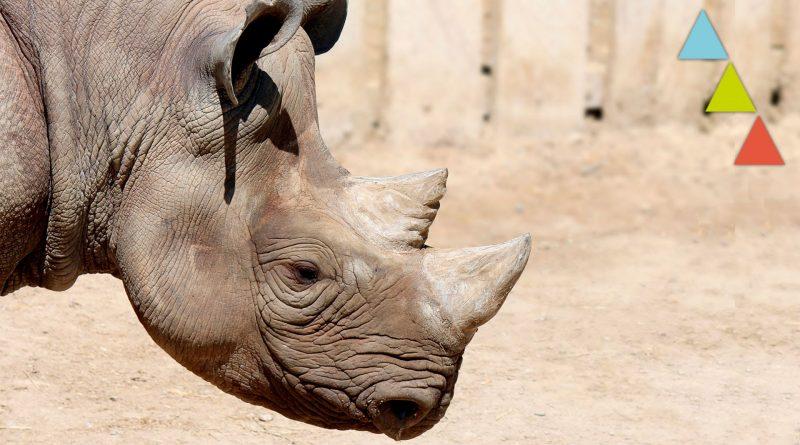 10-animales-que-se-extinguieron-por-culpa-del-hombre