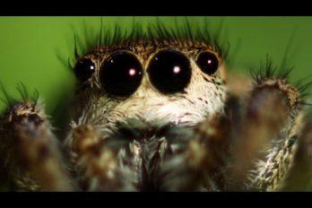 6 datos muy interesantes de las arañas ¿te parecen lindas y misteriosas?