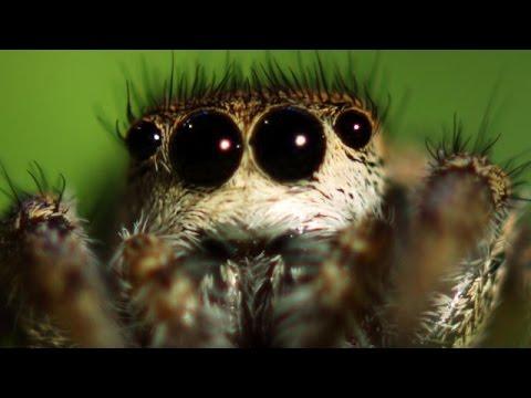 6-datos-muy-interesantes-de-las-arañas-¿te-parecen-lindas-y-misteriosas