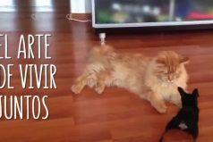 Vivir como perros y gatos… Es más divertido de lo que imaginas ¡Para morir de risa!