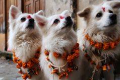 Conoce el festival que le rinde homenaje a los perritos ¡Son lo más lindo del mundo!