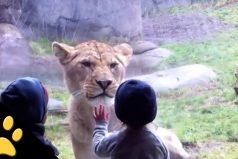 Estos niños en el zoológico son muy divertidos ¡Para reír un buen rato!