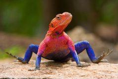 Los 10 reptiles más hermosos del mundo ¡son muy extraños pero lindos!