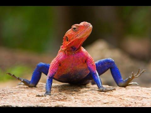Los-10-Reptiles-más-Extraños-del-Mundo-Weird-reptiles