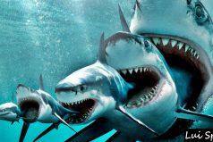 ¡Wow! Conoce los animales más grandes del océano. ¡Son enormes!
