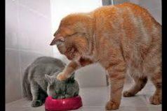 Estos son los gatos más graciosos del mundo ¡Tiernamente divertidos!