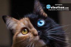 La gata de dos caras que es famosa en redes sociales ¿Una ternura?
