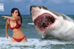 Estos son los 10 tiburones más peligrosos ¡Son impresionantes!